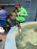 Petting stingrays at the Houston Aquarium